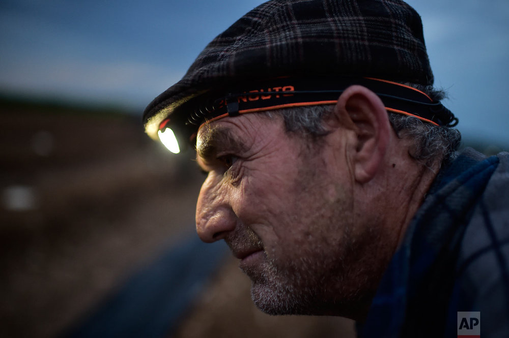 Blas, 53, a Spanish temporary worker, pauses as he collects white asparagus from the field using a lantern in Uterga, around 15 km (9 miles) from Pamplona, northern Spain on Saturday, June 2, 2018. (AP Photo/Alvaro Barrientos)