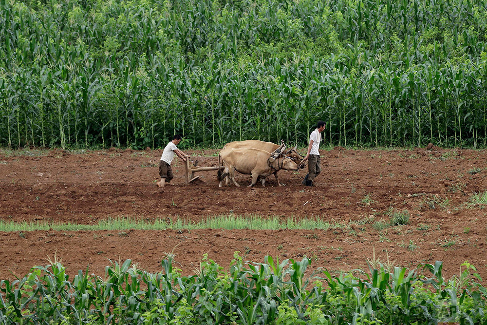 Men plow fields along the Pyongyang-Wonsan highway in Sangwon, North Korea, near Pyongyang, on July 20, 2017. (AP Photo/Wong Maye-E)