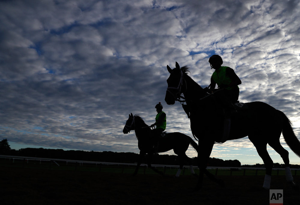 Exercise riders take thoroughbreds onto the track for workouts at Belmont Park, Wednesday, June 6, 2018, in Elmont, N.Y. The 150th running of the Belmont Stakes horse race is on Saturday. (AP Photo/Julie Jacobson)