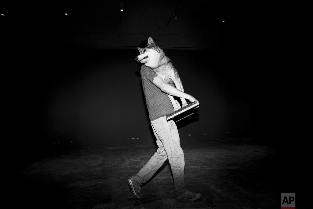 In this Thursday, June 22, 2017 photo, a Tel Aviv University employee carries a stuffed wolf to be displayed at the Steinhardt Museum of Natural History in Tel Aviv, Israel. (AP Photo/Oded Balilty)