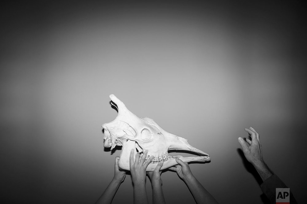 In this Monday, Oct 23, 2017 photo, exhibition designers hold a giraffe skull to be displayed at the Steinhardt Museum of Natural History in Tel Aviv, Israel. (AP Photo/Oded Balilty)