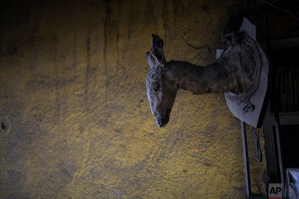 This June 8, 2018 photo shows a deer taxidermy shoulder mount and a wall dusted with volcanic ash spewed by the Volcan de Fuego or Volcano of Fire, in San Miguel Los Lotes, Guatemala. (AP Photo/Rodrigo Abd)