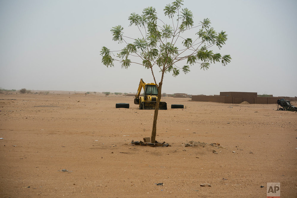 A lone tree grows in front of a road construction vehicle in Niger's Tenere desert region of the south central Sahara on May 30, 2018. (AP Photo/Jerome Delay)