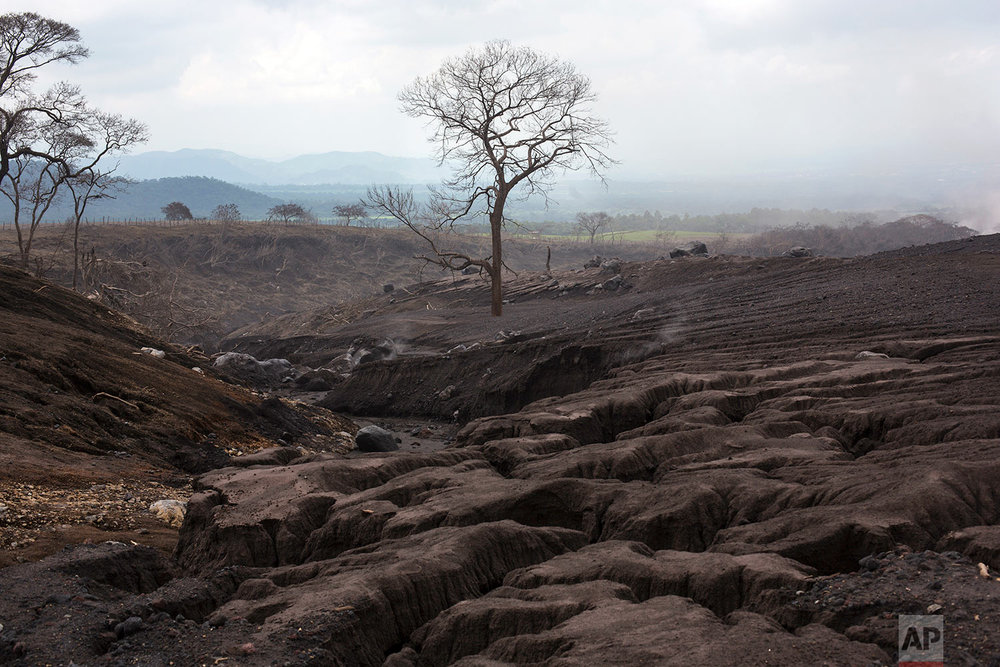 In this June 19, 2018 photo, a lone tree stands amid the destruction created by the passage of ash and rocks from the Volcano of Fire in San Miguel Los Lotes, Guatemala. (AP Photo/Rodrigo Abd)