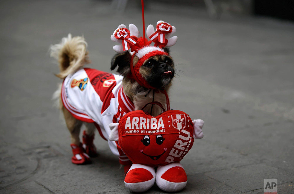"A dog named ""Perlita,"" or Little Pearl, who is dressed in Peru's colors, stands with its owner during a live broadcast of the World Cup match between France and Peru in Lima, Peru, June 21, 2018.(AP Photo/Martin Mejia)"