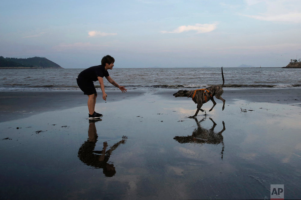 Edith Lam plays with her five-year-old adopted greyhound Garlic from Macau (Yat Yuen) Canidrome, on a beach in Macau. (AP Photo/Kin Cheung)