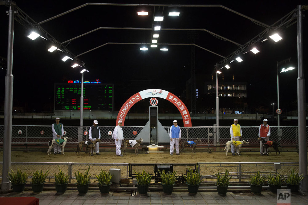 Dog handlers display the greyhounds for spectators before racing at the Macau Yat Yuen Canidrome in Macau. (AP Photo/Kin Cheung)