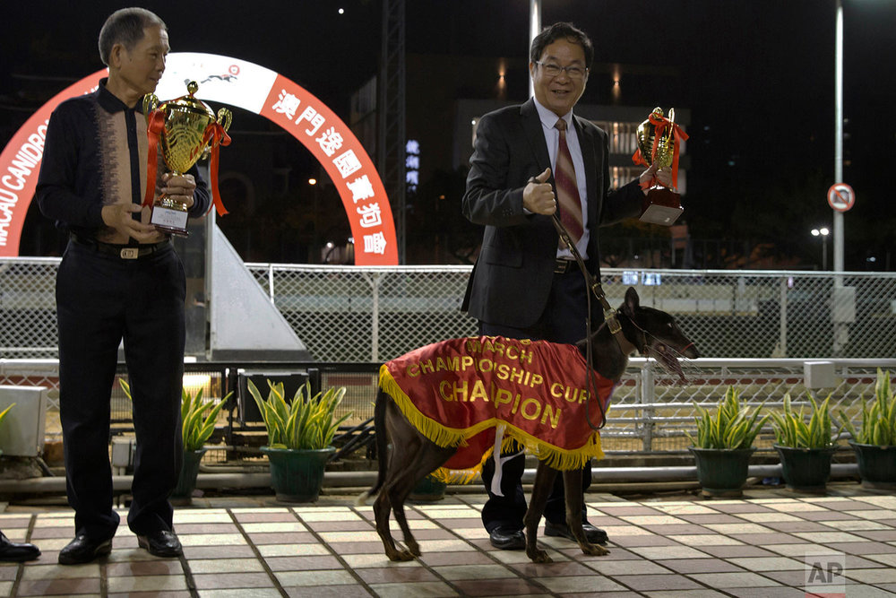 A greyhound owner, right, and trainer, left, show their winning dog at podium at the Macau Yat Yuen Canidrome in Macau. (AP Photo/Kin Cheung)