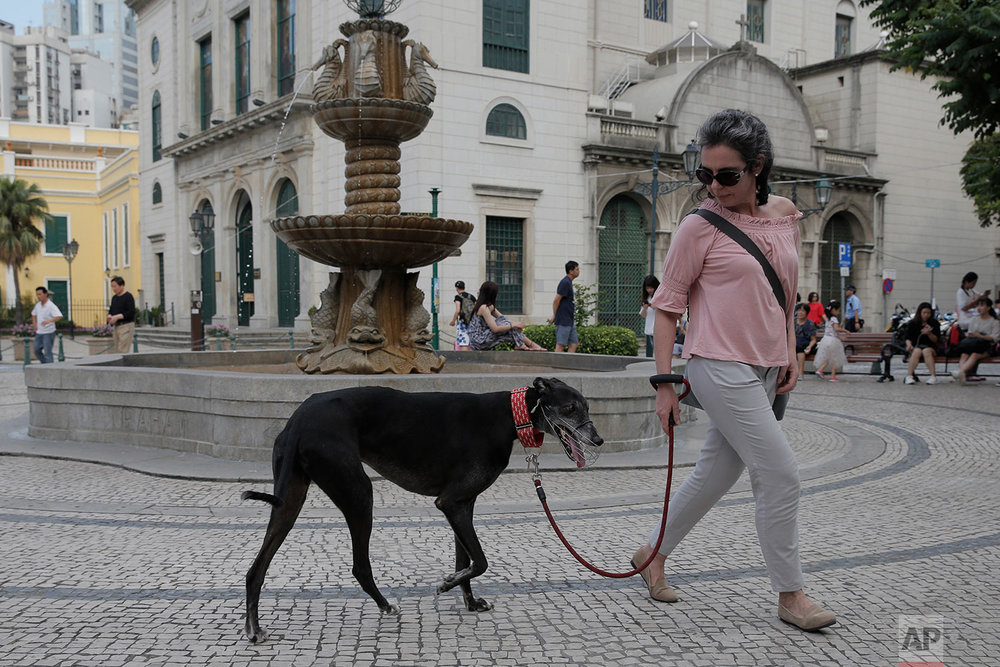 Maria Joao walks with her adopted greyhound from Macau (Yat Yuen) Canidrome in Macau. (AP Photo/Kin Cheung)