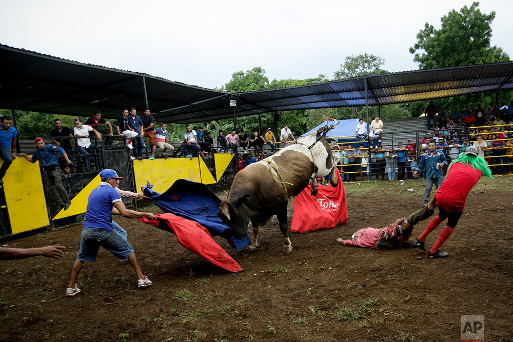 "A bucked rider is dragged to safety during a bull riding event on the eve of the annual Santo Domingo festival in Managua, Nicaragua, July 29, 2018. Festivities include processions, bull riding, parties and church services to pay homage to the popular saint who is fondly referred to as ""Minguito"". (AP Photo/Arnulfo Franco)"