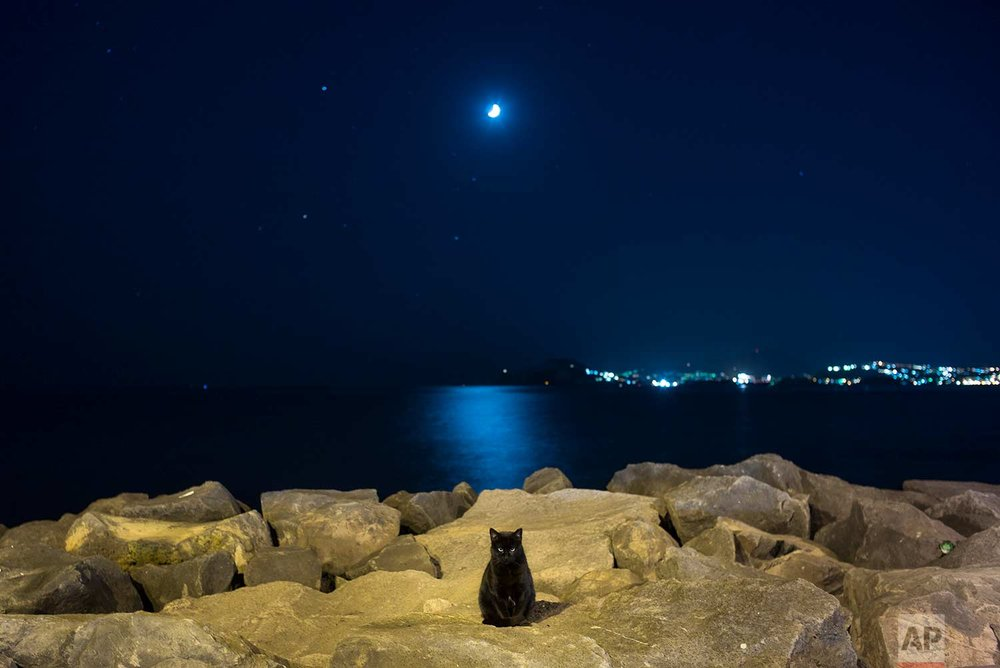 A stray cat sits in the moonlight on rocks of an embankment of the Naples Bay, Italy, Wednesday, Oct. 5, 2016. (AP Photo/Alexander Zemlianichenko)