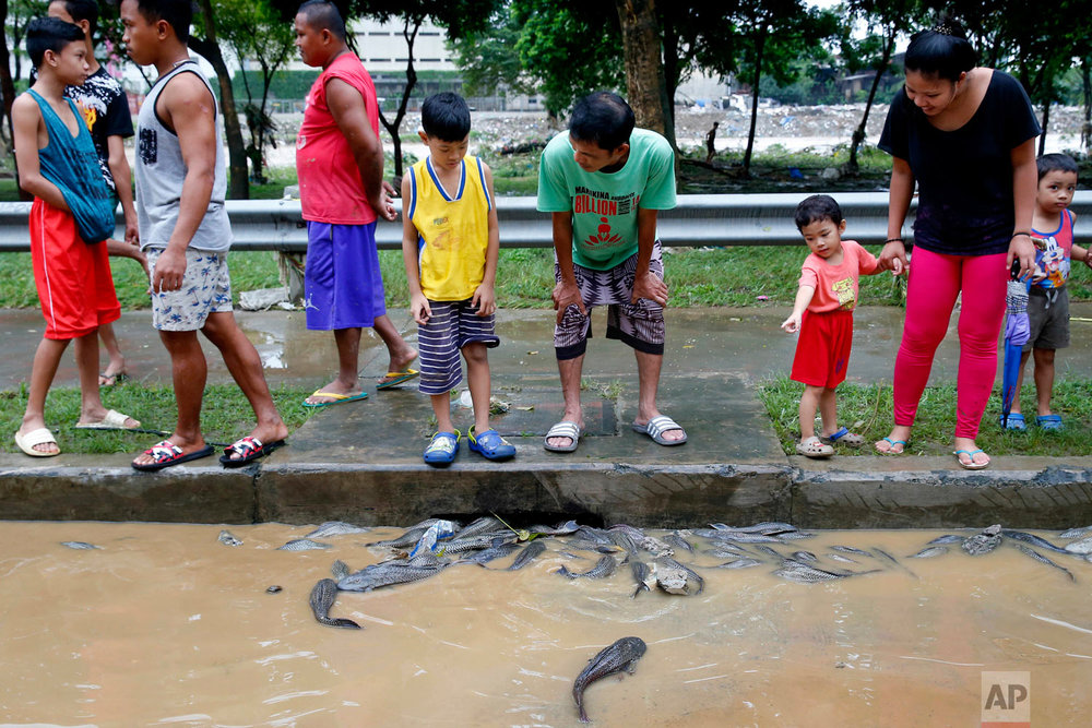 Residents look at janitor fish which were swept into the road from the swollen Marikina River Sunday, Aug. 12, 2018 east of Manila, Philippines. Heavy rains and strong winds brought about by a tropical storm flooded Marikina city overnight, forcing thousands to evacuate their homes. (AP Photo/Bullit Marquez)