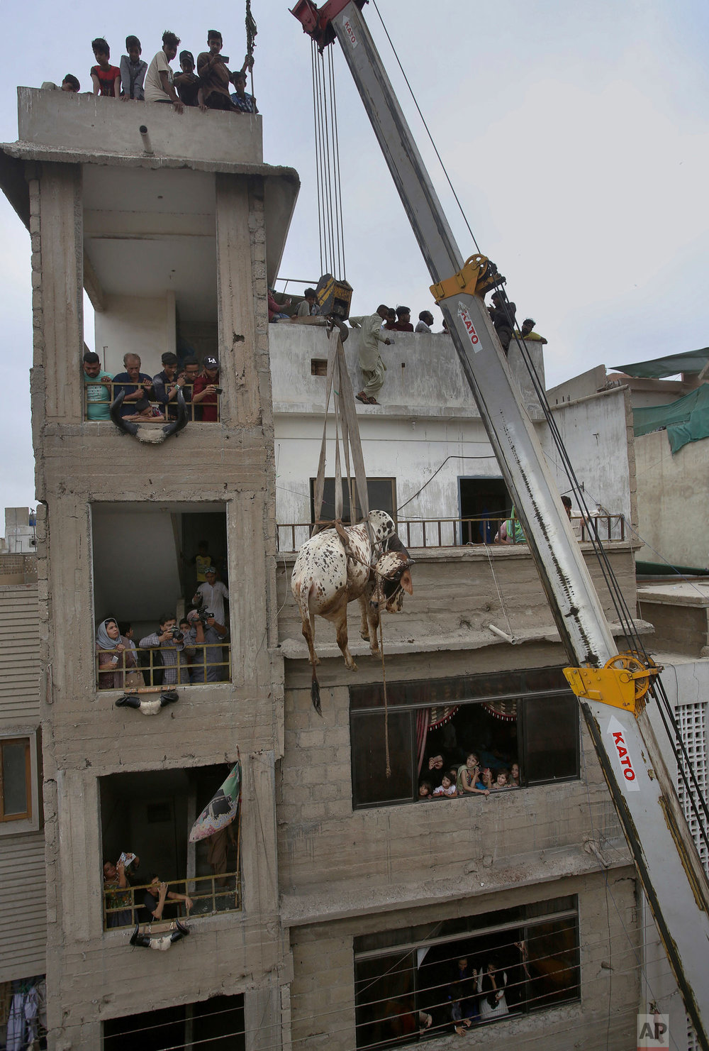 A vendor uses a crane to bring a bull down from the rooftop of his house so he can sell him at a livestock market set up for the upcoming Muslim Eid al-Adha holiday, in Karachi, Pakistan, Sunday, Aug. 12, 2018. Eid al-Adha, or Feast of Sacrifice, Islam's most important holiday marks the willingness of the Prophet Ibrahim (Abraham to Christians and Jews) to sacrifice his son. (AP Photo/Fareed Khan)