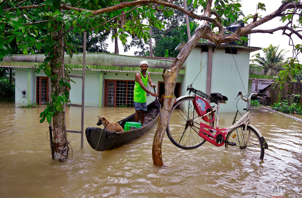 A bicycle is hung from a tree branch to avoid being washed away in flood waters as a man rows past with his dog in a country boat at Kuttanad in Alappuzha in the southern state of Kerala, India, Monday, Aug. 20, 2018. Kerala has been battered by torrential downpours since Aug. 8, with floods and landslides killing at least 250 people. About 800,000 people now living in some 4,000 relief camps. (AP Photo/Tibin Augustine)