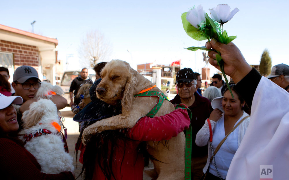 Catholic Priest Justino Limachi blesses dogs by sprinkling them with holy water after a Mass at the parish of Villa Adela to celebrate the feast of San Roque, the patron saint of dogs, in El Alto, Bolivia, Aug. 16, 2018. Every Aug. 16, the church holds he feast of San Roque, or Saint Roch, who legend has it was a 14th century French noble who traveled to Italy to care for plague victims. (AP Photo/Juan Karita)