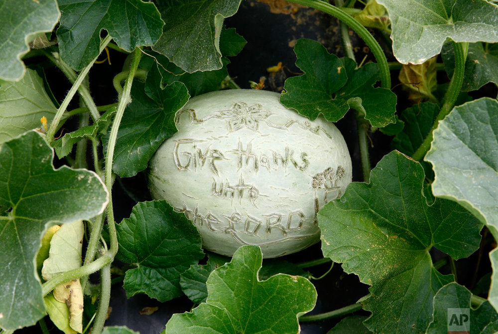 """A message reading """"Give thanks unto the Lord"""" is carved into the skin of a melon at an Old Order Mennonite family's farm on June 18, 2018, in New Holland, Pennsylvania. (AP Photo/Patrick Semansky)"""
