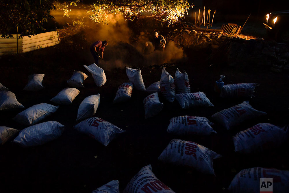 In this Tuesday, Sept.11, 2018 photo, Jesus Luis Remiro, left, picks up charcoal with his brother, Salvador Remiro, and Jose Mari Nieva, center, as part of a process to produce traditional charcoal in Viloria, northern Spain. (AP Photo/Alvaro Barrientos)