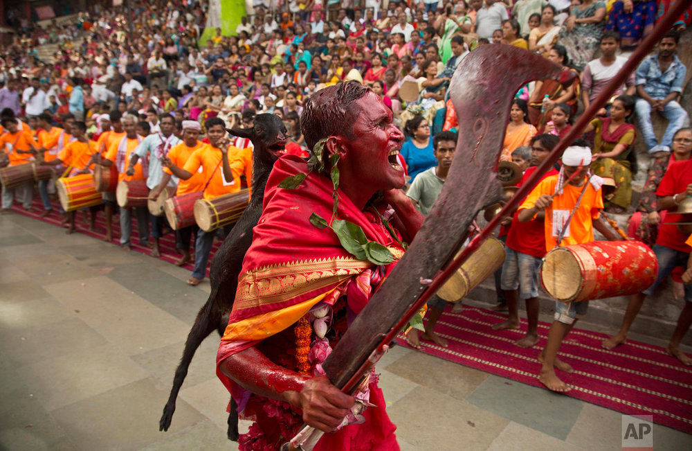 A Hindu priest, whose face is smeared with color and sacrificial blood, carries a goat for sacrifice during Deodhani festival at the Kamakhya Hindu temple in Gauhati, India, Saturday, Aug. 18, 2018. (AP Photo/Anupam Nath)