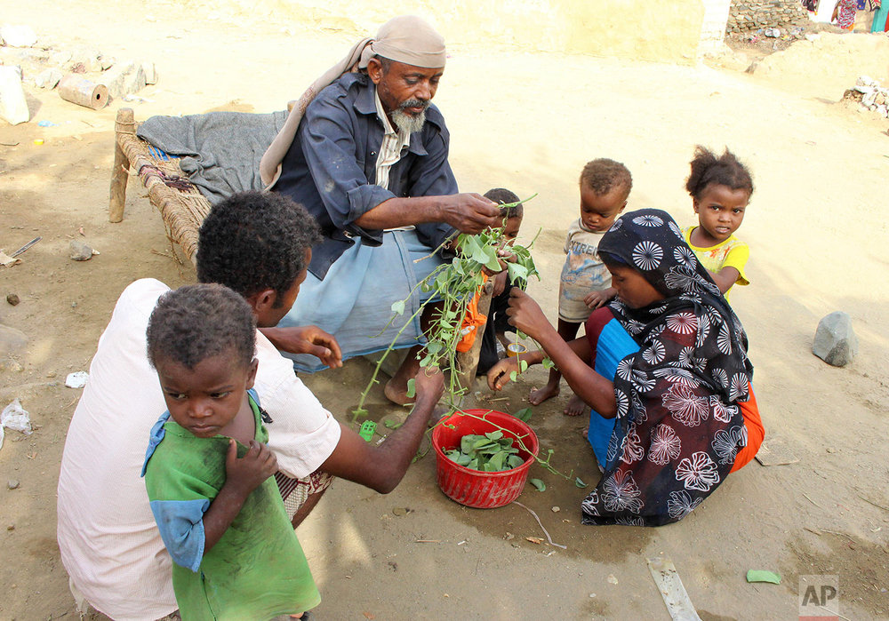 A man feeds children Halas, a climbing vine of green leaves, Aug. 25, 2018, in Aslam, Hajjah, Yemen. (AP Photo/Hammadi Issa)