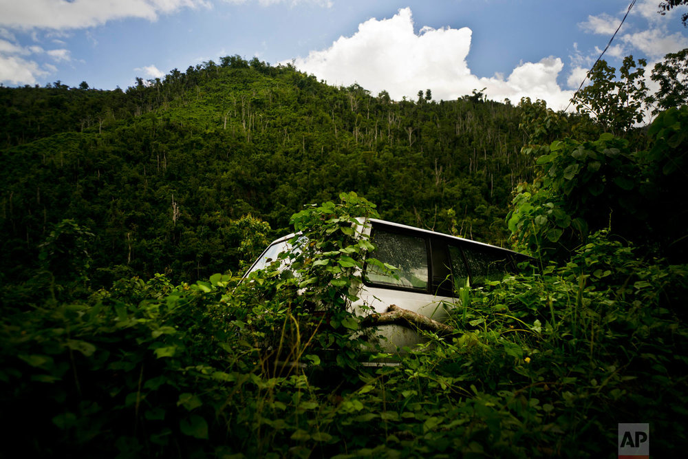 In this Sept. 8, 2018 photo, a car abandoned during Hurricane Maria one year ago is taken over by vegetation in the San Lorenzo neighborhood of Morovis, Puerto Rico. (AP Photo/Ramon Espinosa)