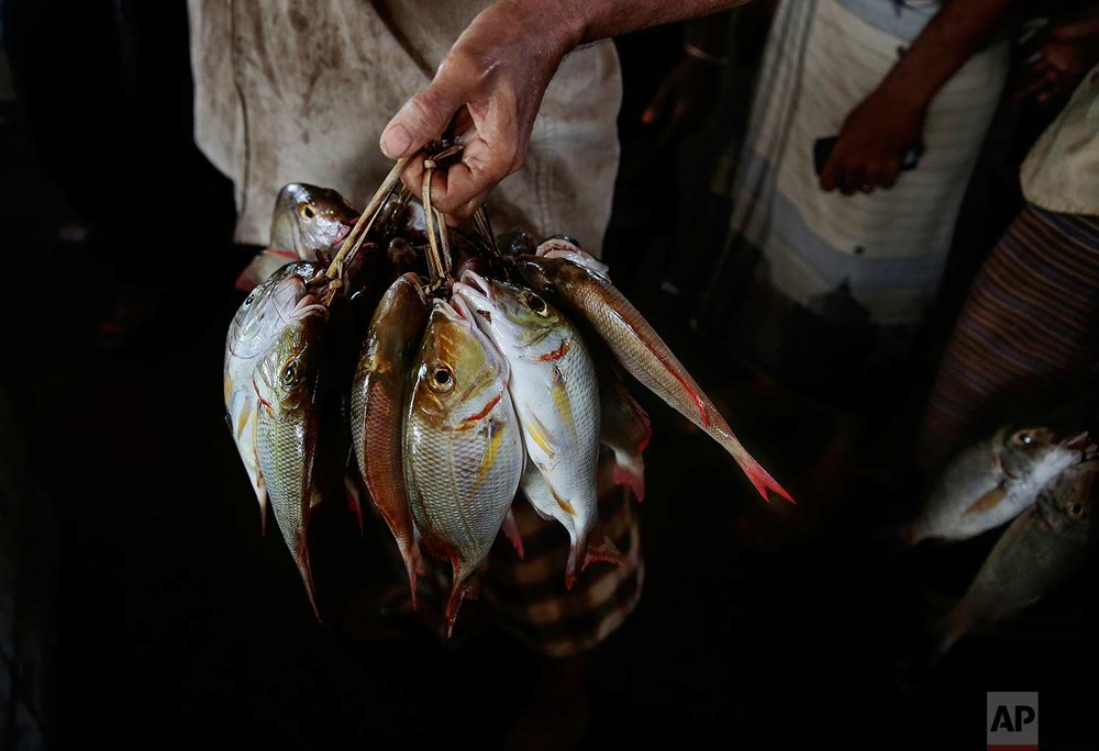 In this Sept. 29, 2018, photo, a fisherman holds fish at the main fishing port in Hodeida, Yemen. (AP Photo/Hani Mohammed)