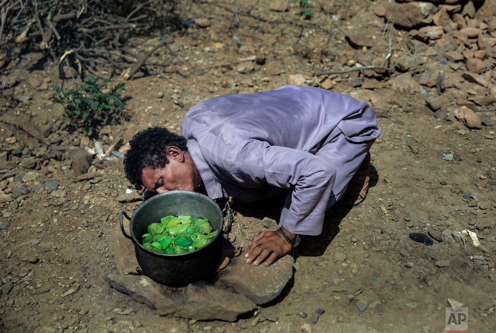 A man cooks Halas for his children, a climbing vine of green leaves, in Aslam, Hajjah, Yemen. (AP Photo/Hani Mohammed)