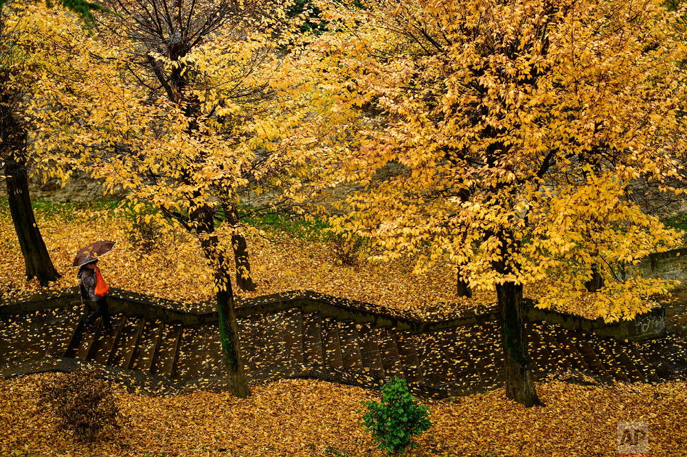 A pedestrian makes their way down a stairway through a row of trees during a rainy autumn day, in Pamplona, northern Spain, Tuesday, Nov. 20, 2018. (AP Photo/Alvaro Barrientos)
