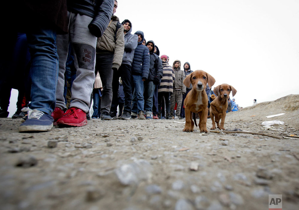 Stray puppies stand by a line of migrants waiting for food distribution at a camp in Velika Kladusa, Bosnia, close to the border to Croatia, Sunday, Nov. 18, 2018. (AP Photo/Amel Emric)