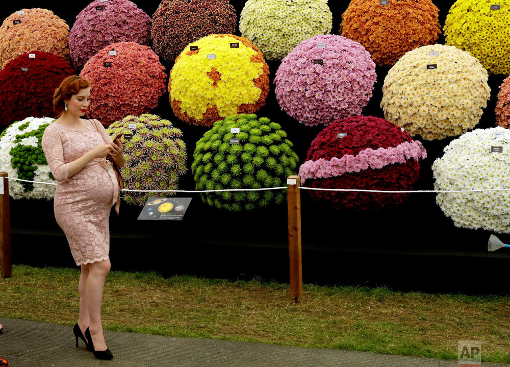 A visitor walks past the National Chrysanthemum Society display at the RHS (Royal Horticultural Society) Chelsea Flower Show in London on May 21, 2018.  (AP Photo/Matt Dunham)