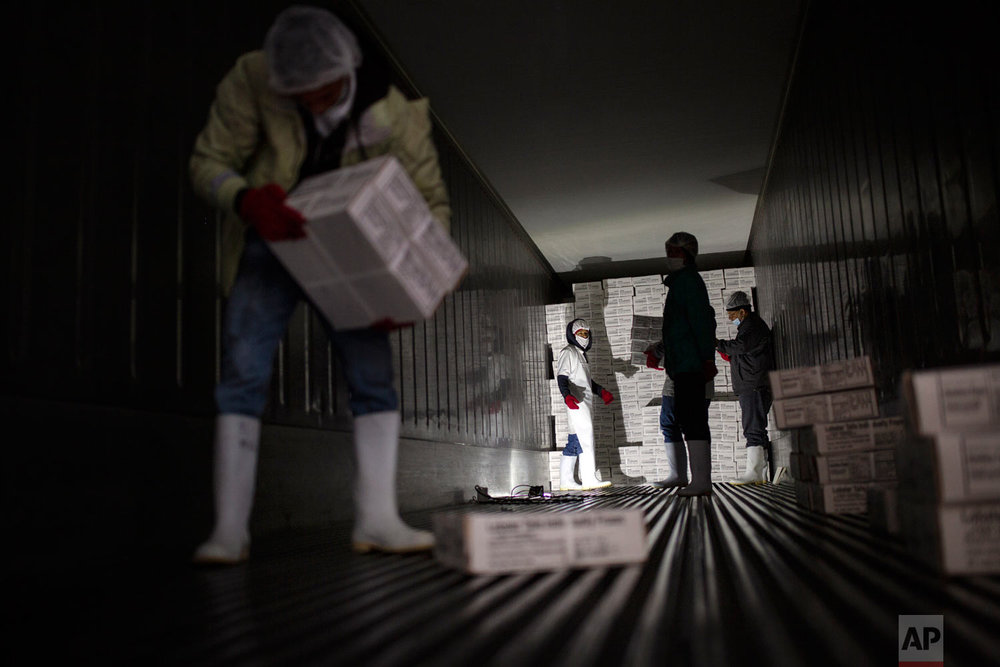 In this Jan. 27, 2018 photo, men organized inside a container packages of frozen lobster to export to the U.S., in a factory in La Ceiba, Honduras. (AP Photo/Rodrigo Abd)