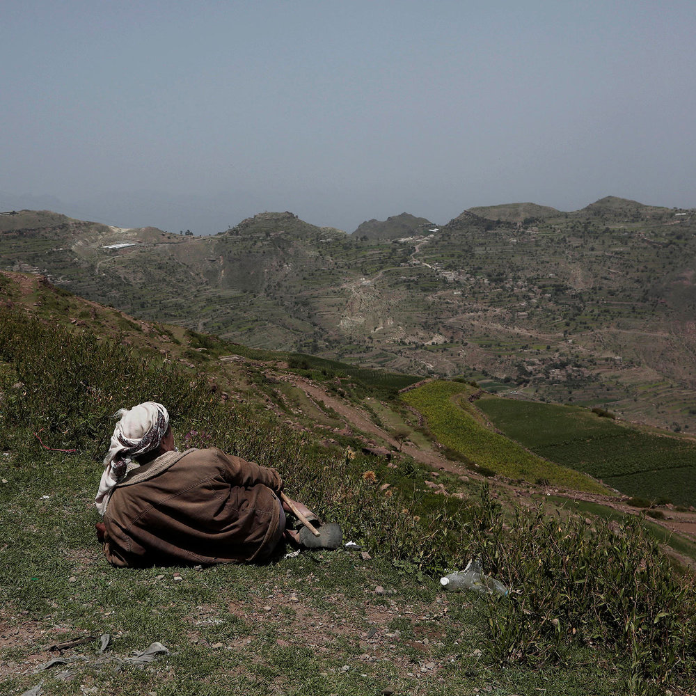 In this Aug. 3, 2018 photo, a farmer gazes at mountains where the terraces were planted with corn, barbary figs and qat, on the side of a road in Ibb, Yemen. (AP Photo/Nariman El-Mofty)