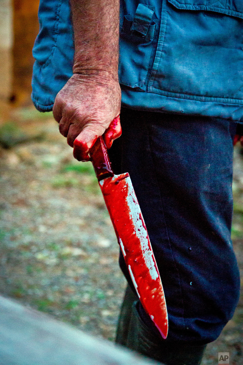 In this photo taken on Nov. 24, 2018, Lorenzo, a professional slaughterer, holds a knife which was used to slaughter a pig near Petra, some 60 kilometres from Palma, the capital of Mallorca, Spain. (AP Photo/Francisco Ubilla)