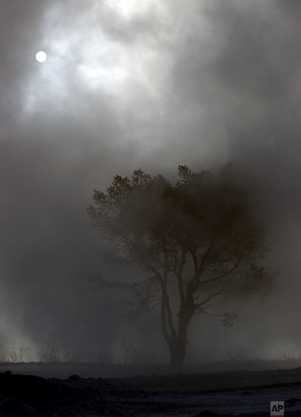 A tree is shrouded in fog at Northwestern University in Evanston, Ill., Wednesday, Jan. 30, 2019. (AP Photo/Nam Y. Huh)