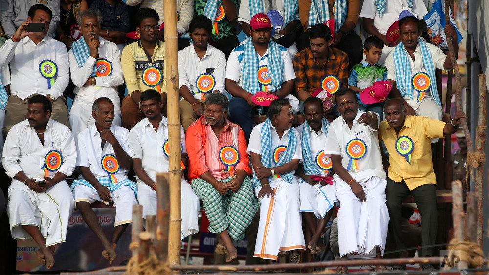 Members of Jallikattu organizing committee attend traditional bull-taming festival called Jallikattu, in the village of Palamedu, near Madurai, Tamil Nadu state, India, Wednesday, Jan. 16, 2019. (AP Photo/Aijaz Rahi)