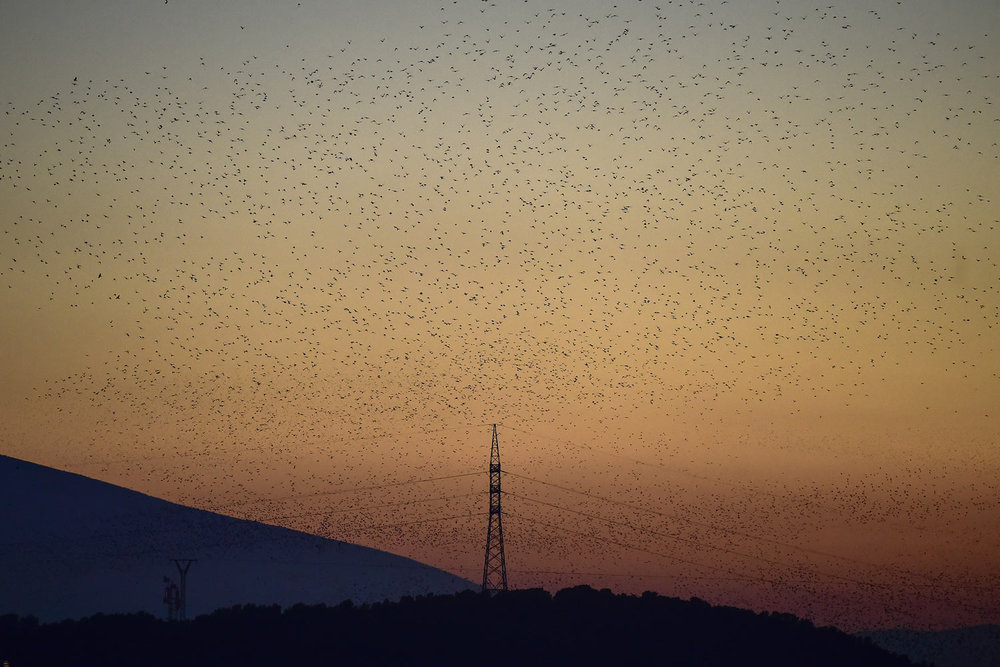 Thousands of birds fly in a giant flock over a high voltage electrical tower as the sun sets during a winter evening, near the village of Tudela, northern Spain, on Friday, Feb. 15, 2019. (AP Photo/Alvaro Barrientos)