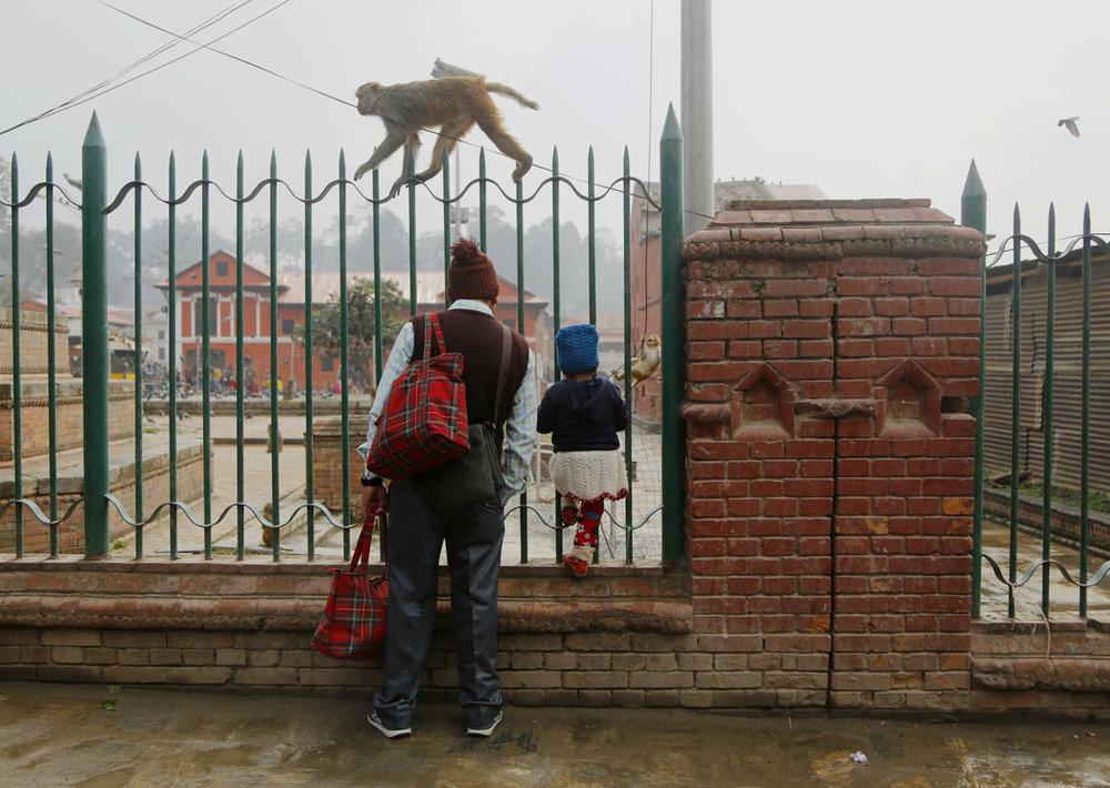 A man and a child watch monkeys at the Pashupatinath temple premises in Kathmandu, Nepal, Tuesday, Feb. 19, 2019. Monkeys abound in the area around the temple premise. (AP Photo/Niranjan Shrestha)