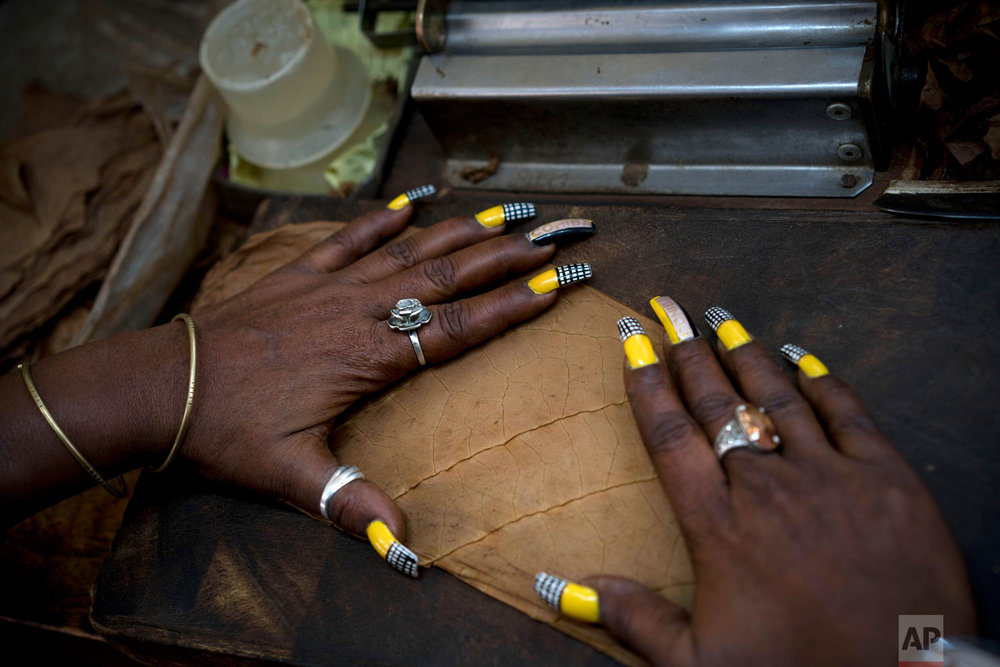 A worker whose are nails painted with the Cohiba motif, prepares tobacco leaves to make cigars at the El Laguito factory, on the sidelines of the Habano Cigar Festival in Havana, Cuba, Feb. 21, 2019. (AP Photo/Ramon Espinosa)