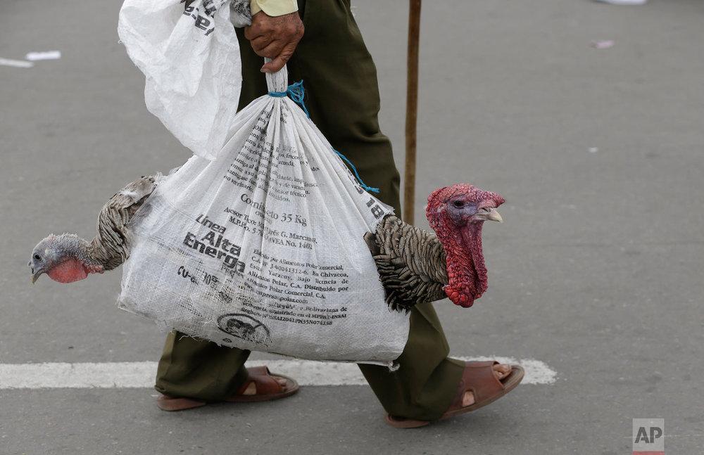 Marco, a Venezuelan man, transports turkeys in a burlap bag, in La Parada, near Cucuta, Colombia, on the border with Venezuela, Feb. 9, 2019. (AP Photo/Fernando Vergara)