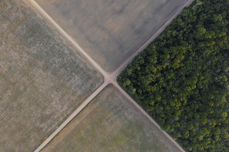 Brazil's Amazon rainforest and development at a crossroads