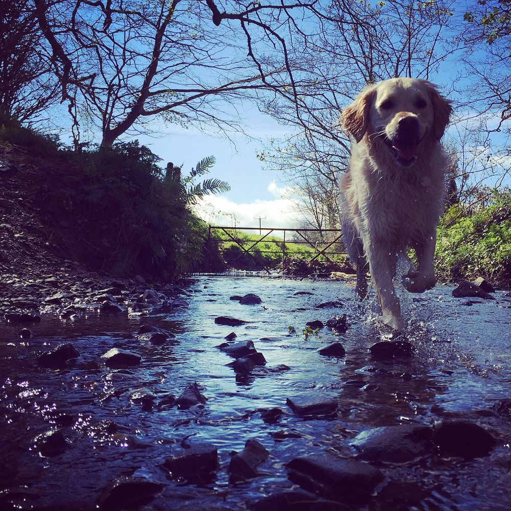 river_bridge_happy_dog_country_helens_bay_to_crawfordsburn_roadtrip_coast_ni_explorer_niexplorer_northern_ireland_blog.jpg