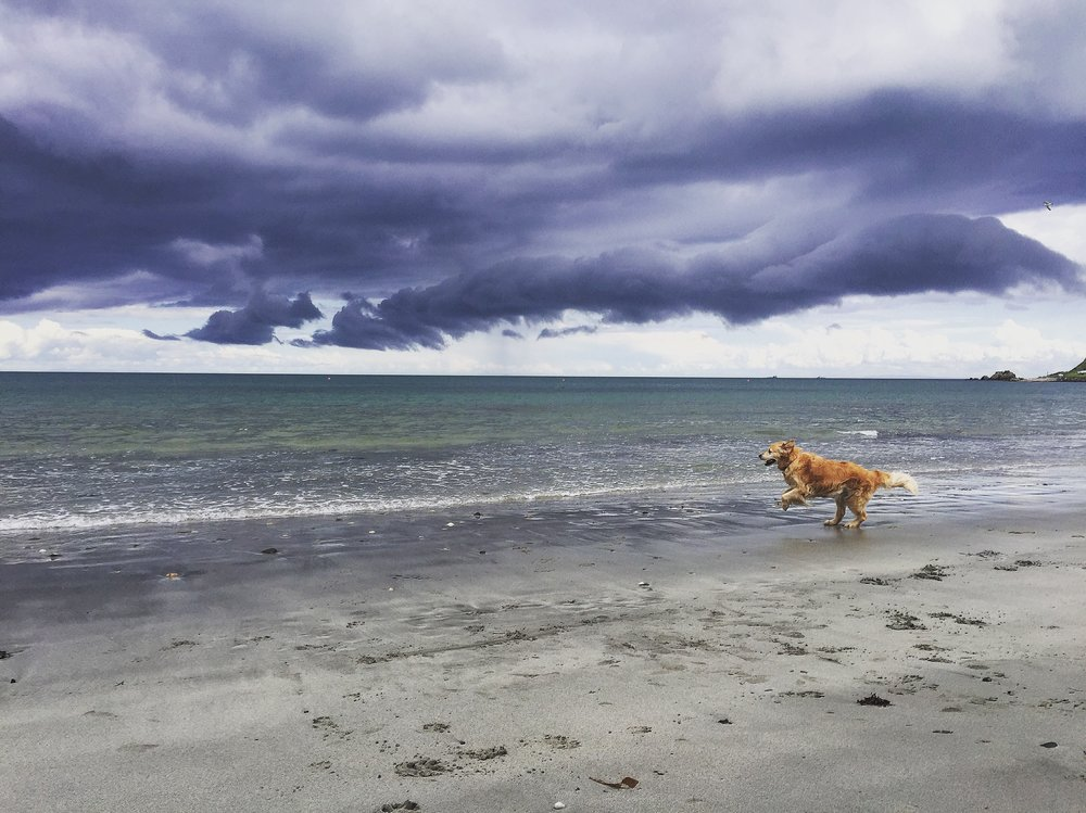 dogs_ballygally_beach_golden_retriever_roadtrip_causeway_antrim_coast_ni_explorer_niexplorer_northern_ireland_blog.jpg