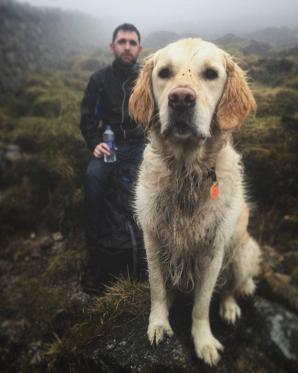 dog_pup_golden_retriever_hares_gap_slieve_donard_newcastle_tollymore_mourne_mountains_ni_explorer_niexplorer_northern_ireland_blog.jpg