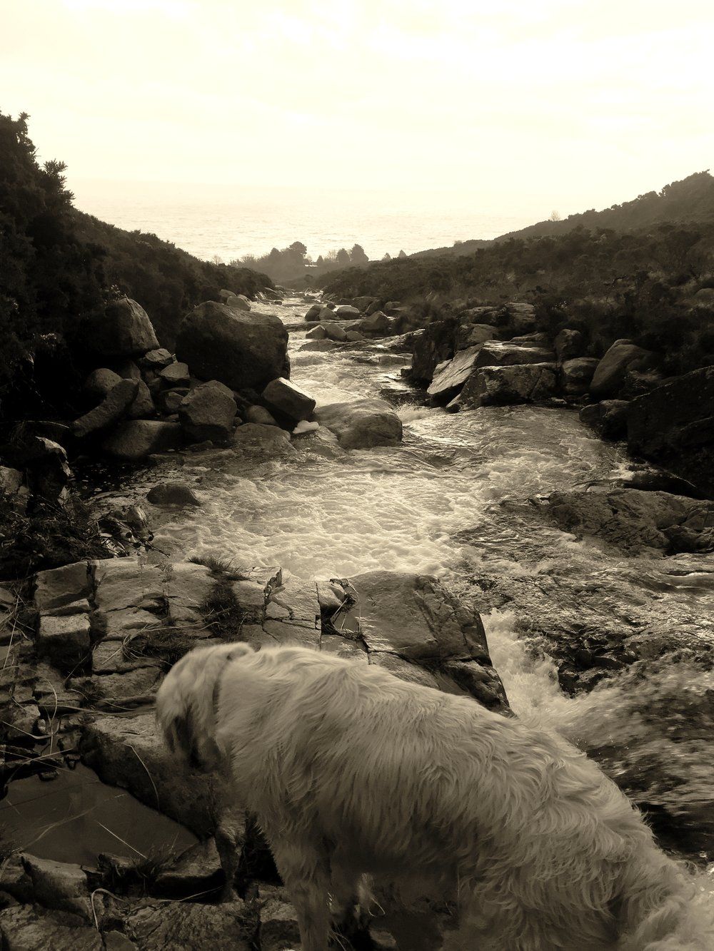 dog_river_bw_slieve_donard_newcastle_tollymore_mourne_mountains_ni_explorer_niexplorer_northern_ireland_blog.jpg