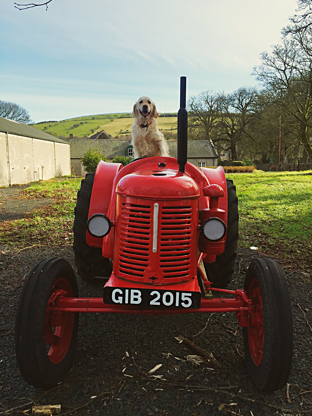 dog_on_tractor_glenarm_glens_antrim_ni_explorer_niexplorer_northern_ireland_blog.jpg