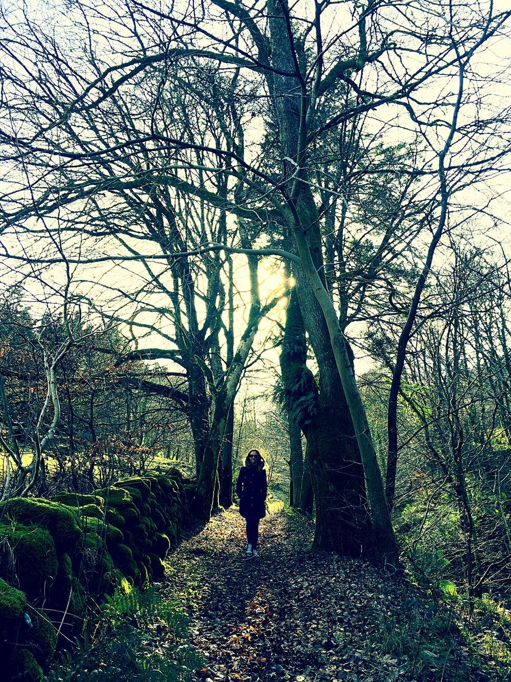 silhouette_forest_glenariff_glenoe_glenarm_glens_antrim_ni_explorer_niexplorer_northern_ireland_blog.jpg