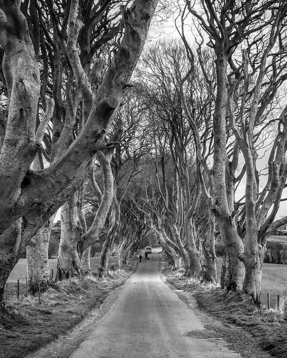 dark_hedges_antrim_roadtrip_ni_explorer_niexplorer_northern_ireland_blog.jpg