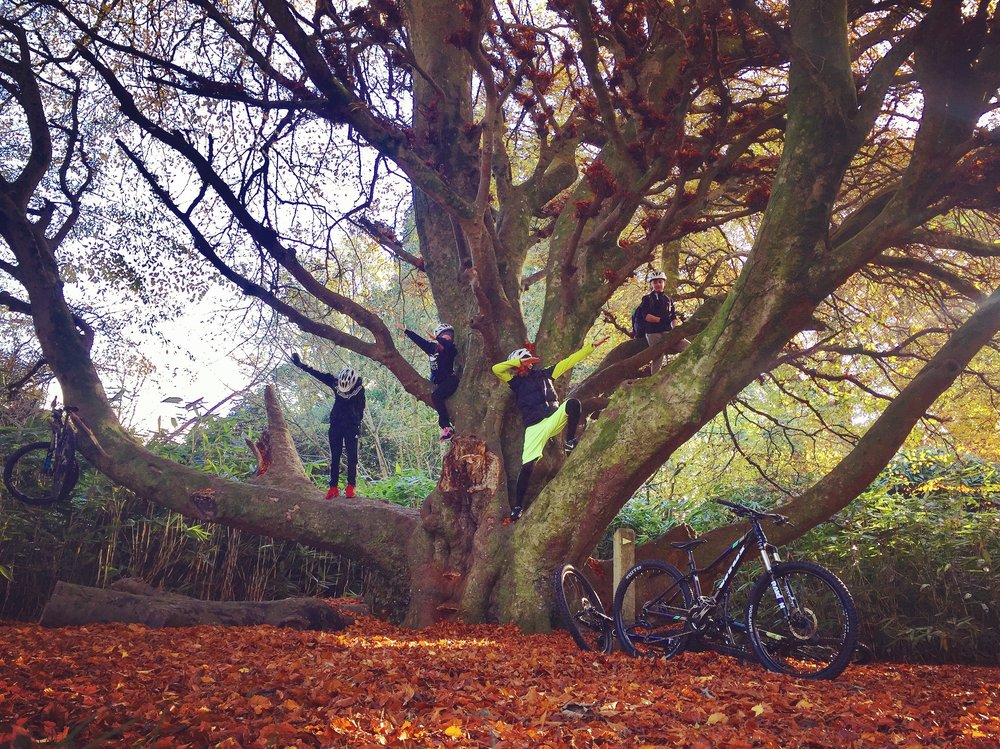 dab_tree_castlewellan_forest_park_mountainbike_kayak_maze_niexplorer_ni_explorer_northern_ireland.jpg