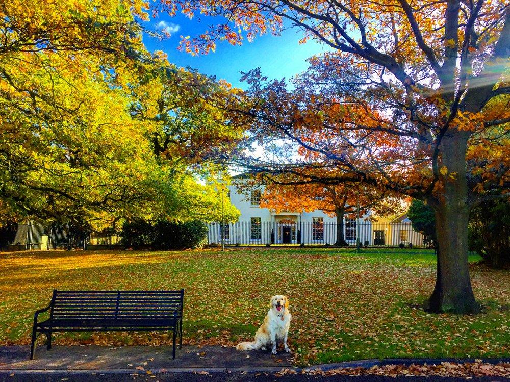 barnett_demesne_belfast_malone_house_niexplorer_ni_explorer_northern_ireland.jpg