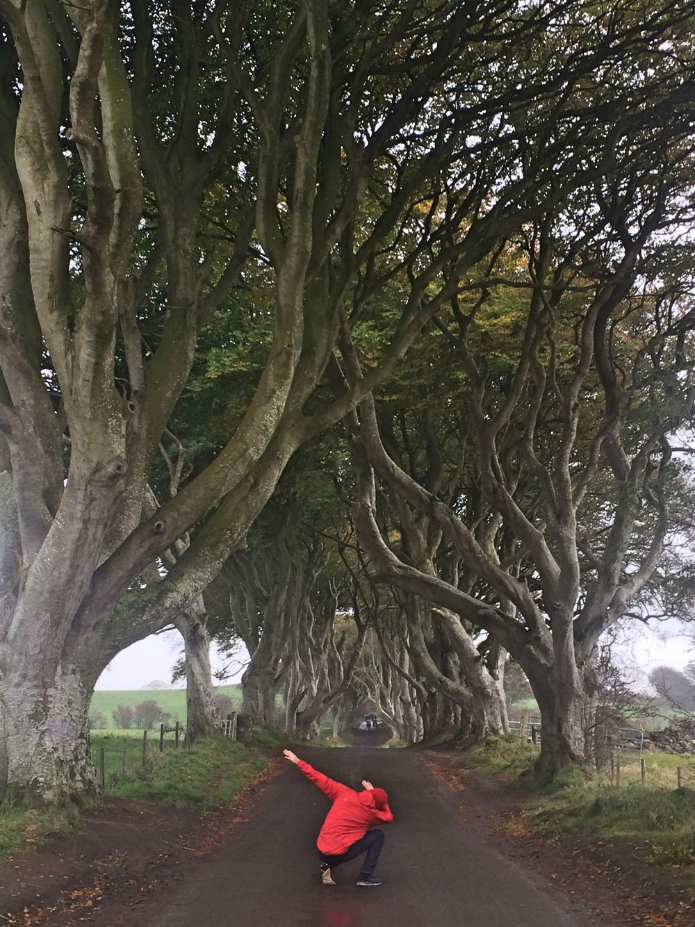 dark_hedges_darkhedges_northern_ireland_niexplorer_ni_explorer (8).jpg