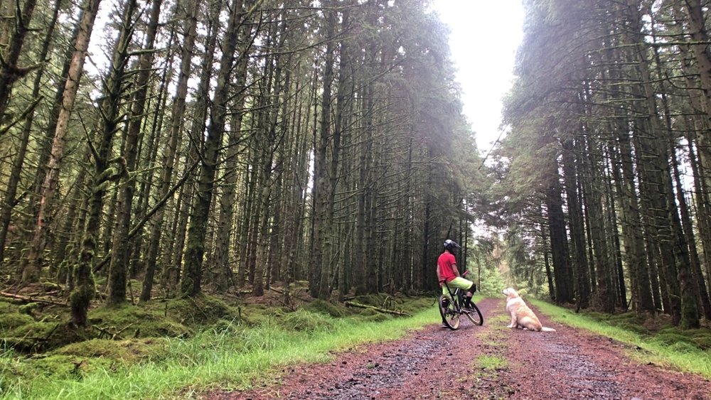 ni_explorer_davagh_forest_mountain_biking_northern_ireland (10).jpg
